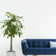 Palm next to navy blue sofa with cushion in white flat interior - PhotoDune Item for Sale