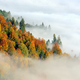 Forest on the mountain slope with fog - PhotoDune Item for Sale