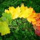 Autumn leafs colorful rainbow color gradient - PhotoDune Item for Sale