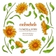 Calendula Elements  Vector Set - GraphicRiver Item for Sale