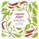 Cayenne Pepper Elements Set - GraphicRiver Item for Sale