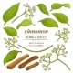 Cinnamon Elements Set - GraphicRiver Item for Sale