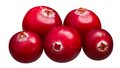Cranberries v. oxycoccus pile, paths - PhotoDune Item for Sale