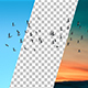 Bird Flock Flying - VideoHive Item for Sale