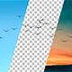 Flying Bird Flock Forward - VideoHive Item for Sale