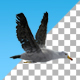 Seagull Flight Loop - VideoHive Item for Sale
