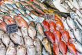 Fresh fish for sale at a market  - PhotoDune Item for Sale