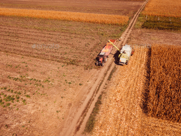 Aerial view of combine harvester pouring corn kernels into cart - Stock Photo - Images