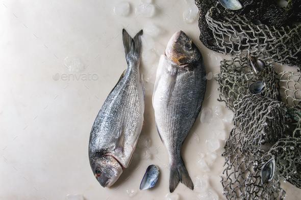 Raw sea bream fish - Stock Photo - Images
