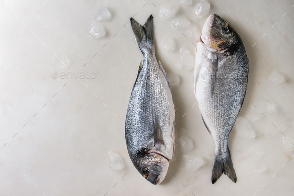 Raw sea bream fish - Stock Photo - Images