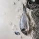 Raw sea bream fish - PhotoDune Item for Sale