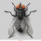 Realistic Insect Fly in Vector - GraphicRiver Item for Sale