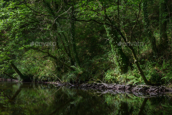 The edges of the forest are reflected in a pool - Stock Photo - Images