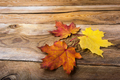 Thanksgiving or fall symbol maple leaves, copy space - PhotoDune Item for Sale