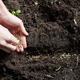 Hand of woman sowing seeds in soil - PhotoDune Item for Sale