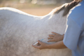 Midsection of vet injecting horse at barn - PhotoDune Item for Sale