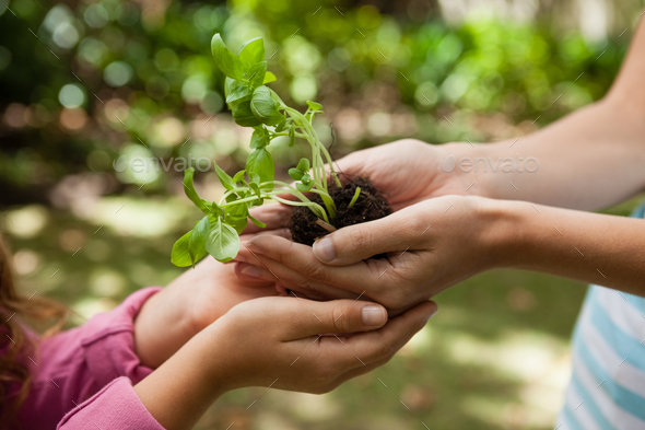 Cropped cupped hands of mother giving seedling to girl - Stock Photo - Images