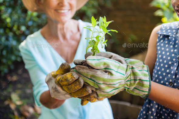 Midsection of grandmother and granddaughter holding seedling - Stock Photo - Images