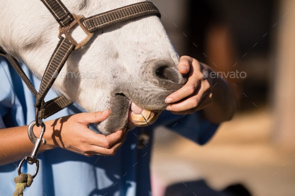 Midsection of female vet examining horse mouth - Stock Photo - Images