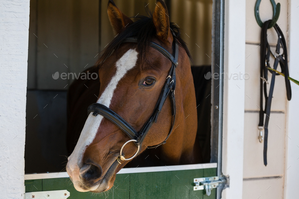 Horse at stable - Stock Photo - Images