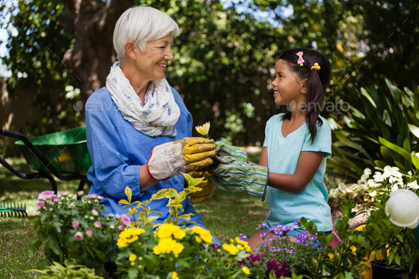 Smiling grandmother and granddaughter looking at each other while holding flower - Stock Photo - Images