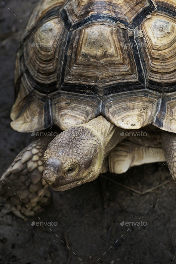 Closeup of Tortoise with beautiful pattern on it shell - Stock Photo - Images