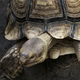Closeup of Tortoise with beautiful pattern on it shell - PhotoDune Item for Sale