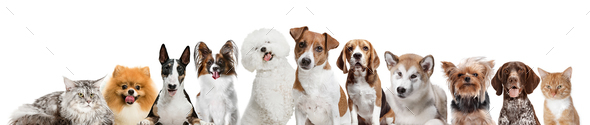 Differents dogs looking at camera isolated on a white background - Stock Photo - Images