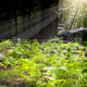 Natural fern in forest with penetrating sun rays - PhotoDune Item for Sale