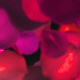 Rose Petals Widescreen - VideoHive Item for Sale