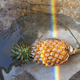 Pineapple with rainbow reflection light - PhotoDune Item for Sale