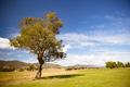 Allans Flat Landscape Australia - PhotoDune Item for Sale
