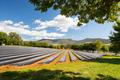 Australian Strawberry Farm Area - PhotoDune Item for Sale