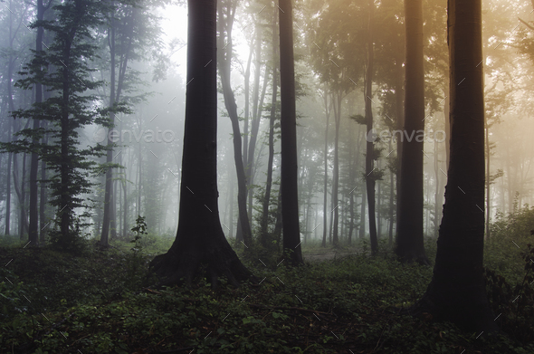 Colorful forest background with tall trees and strange light - Stock Photo - Images