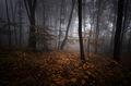 Enchanted autumn woods with orange leaves and fog - PhotoDune Item for Sale