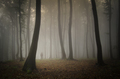 SIlhouette of man in mysterious woods with fog in late autumn - PhotoDune Item for Sale