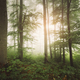 Sun rising in green forest with lush vegetation - PhotoDune Item for Sale