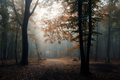 Road through autumn woods with fallen leaves - PhotoDune Item for Sale
