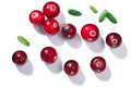 Cranberries v. oxycoccus, top view, paths - PhotoDune Item for Sale