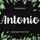 Antonio Script Font - GraphicRiver Item for Sale