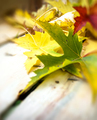 Autumn leaves abstract closeup - PhotoDune Item for Sale