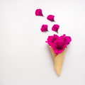Flowers in cone. - PhotoDune Item for Sale