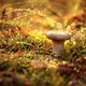 Mushroom Boletus In a Sunny forest in the rain. - PhotoDune Item for Sale