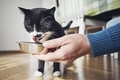 Hungry domestic cat - PhotoDune Item for Sale