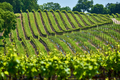 Vineyards in California, USA - PhotoDune Item for Sale