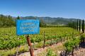 Cabernet Sauvignon wine grape variety sign in vineyard - PhotoDune Item for Sale