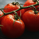 Ripe cherry tomatoes with drops on branch - PhotoDune Item for Sale