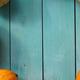 Big yellow pumpkins in circle - PhotoDune Item for Sale