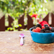 Tasty berries on the table - PhotoDune Item for Sale