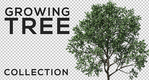 Trees Growind & Animation